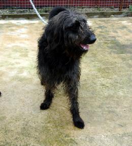 Small Scruffy Dog Breeds