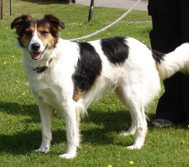 Gables Farm Dog Rescue Plymouth