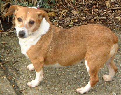 Ark Dog Rescue Hampshire