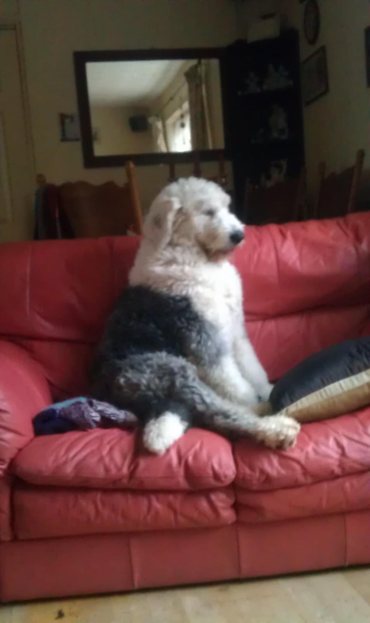 Year Old Dog Leaking Urine