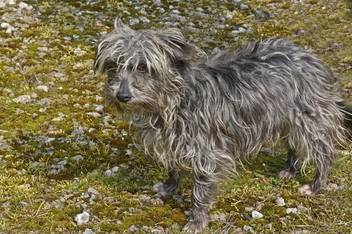 Toffee – 6 year old female Terrier Cross