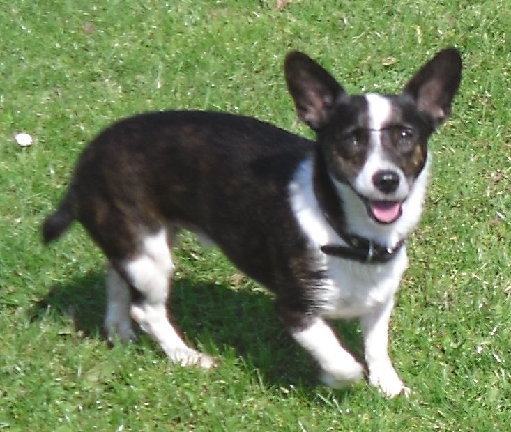 Posts by West Yorkshire Dog Rescue   Dogs for Adoption ...