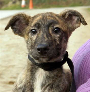 Barney – 5 month old...