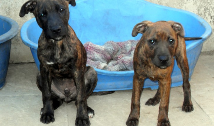 Siete – 15 week old female Cross-Breed dog for adoption