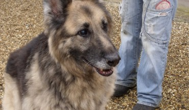 Forest Lodge Dog Rescue