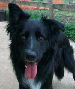 Posts by Valgrays Border Collie Rescue Surrey   Dogs for