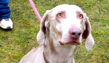 Crostwick Dog Rescue