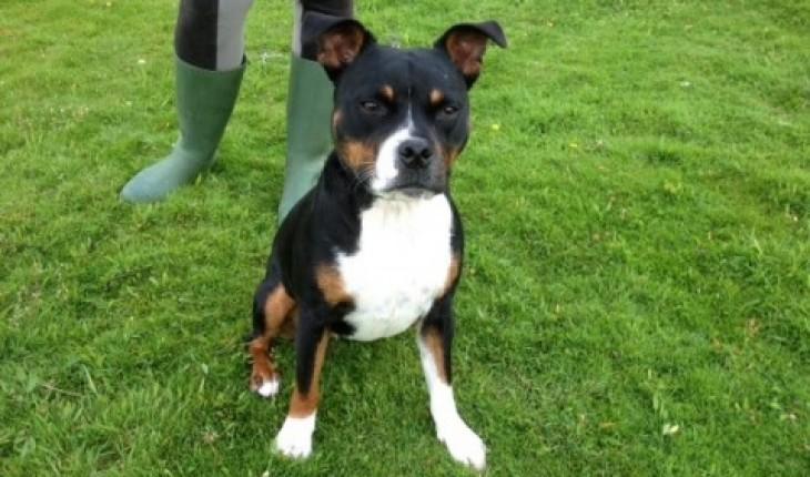 Crostwick Dog Rescue Norwich