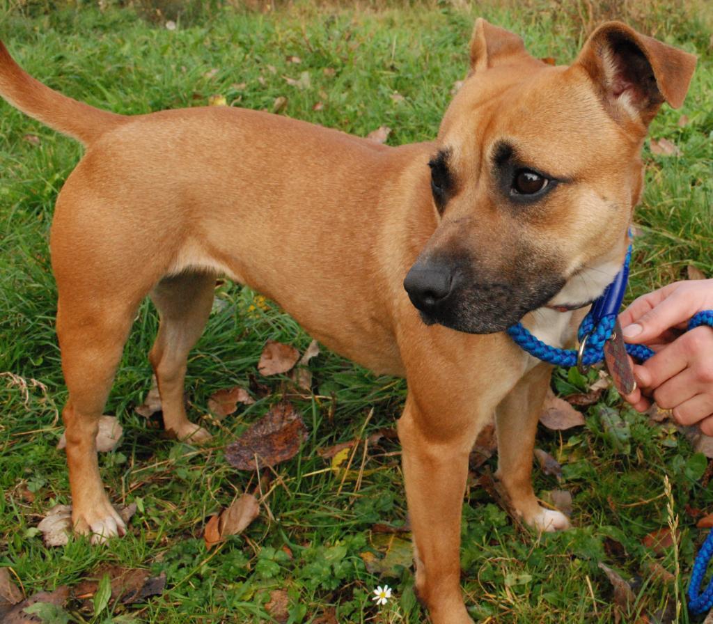 Dog Rescue Notts Lincs