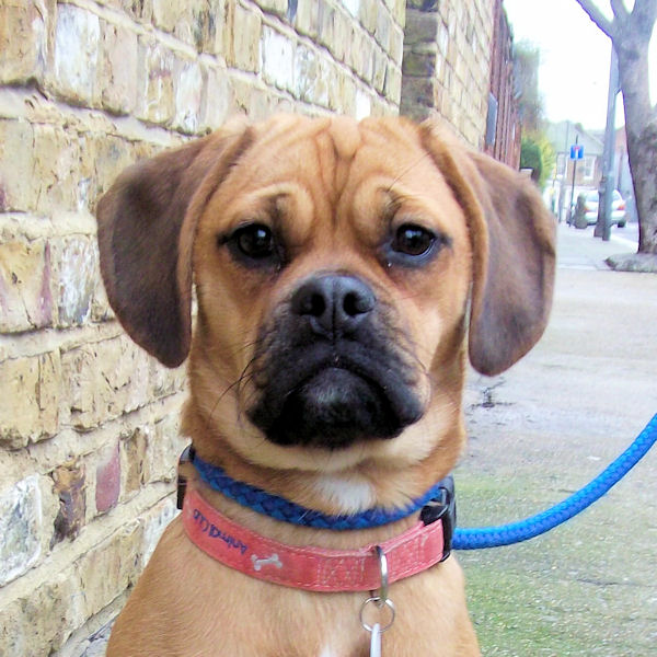 Holly – 7 month old ...
