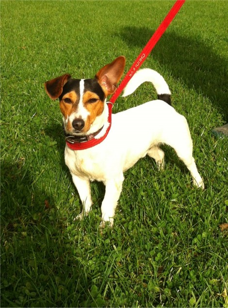 Posts by Moorlands k9 Rescue Shropshire | Dogs for ...