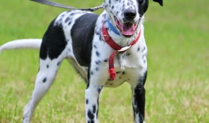 Allsorts Dog Rescue List