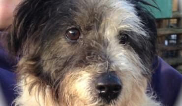 Second Chance Dog Rescue Derbyshire