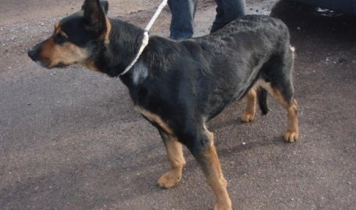 Dog Kennels Wrantage