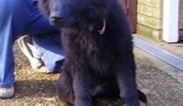 Rspca Maidstone Dog Rescue