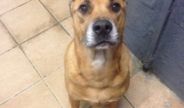 Rosedene Animal Rescue Centre Meet The Dogs