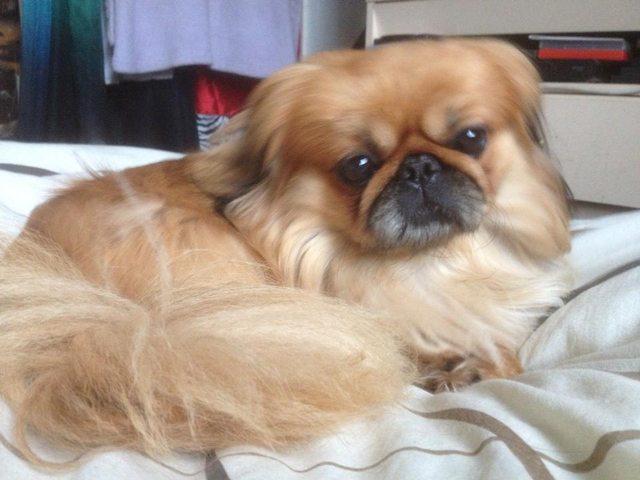 Dogsblog Com Dogs For Adoption And Rescue