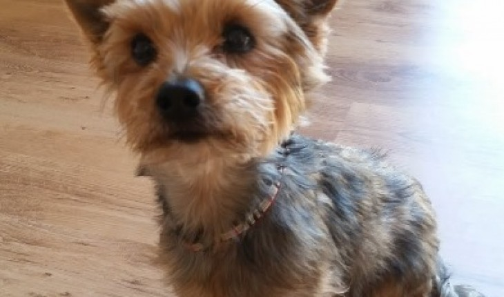 Toby – 10 year old m...