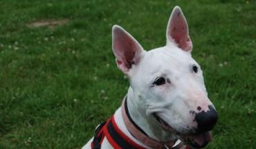 Millbrook Dog Rescue