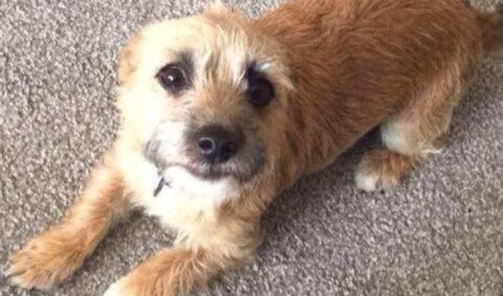 Dog Rescue Brentwood Essex
