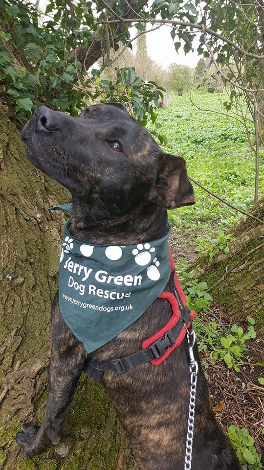Posts by Jerry Green Dog Rescue North Yorkshire   Dogs for ...
