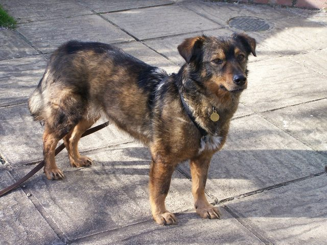 Ruby – 4 year old female Cross-Breed