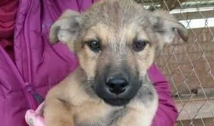 Sos Romanian Dog Rescue South West