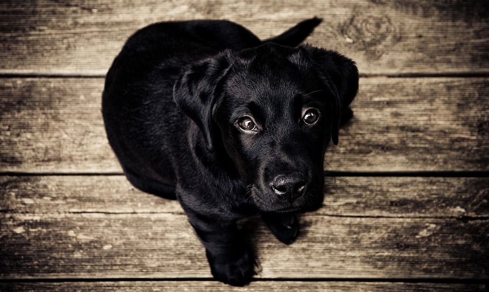 These Myths About Black Dogs Are Totally True, Aren't They?