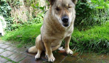 Blind Dogs For Adoption Uk