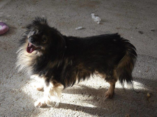 Bubu 12 Year Old Male Cross Breed Dog For Adoption