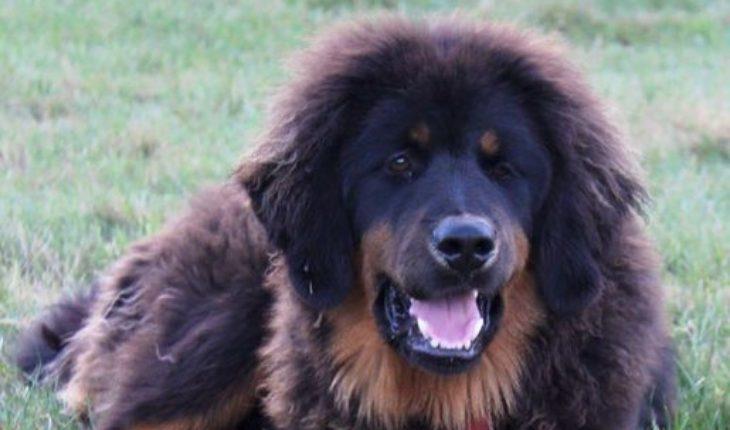 Lafayette La Dog Adoptions