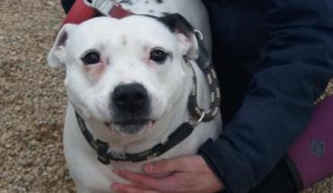 Ex Breeding Dogs Needing Homes
