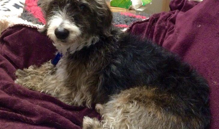 Small Dogs For Rescue In Essex