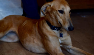 Toff – 3 year old female Lurcher · All Animal Rescue Southampton |