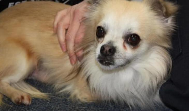 Dog Rescue Chesterfield Derbyshire