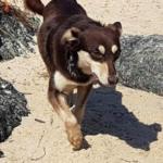 Wispa – 1 year old female Cross-Breed