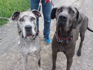 Skye and Sophie ? 2-3 year old female Cross-Breeds