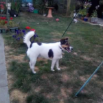 Bonzo – 2 year old male Cross-Breed