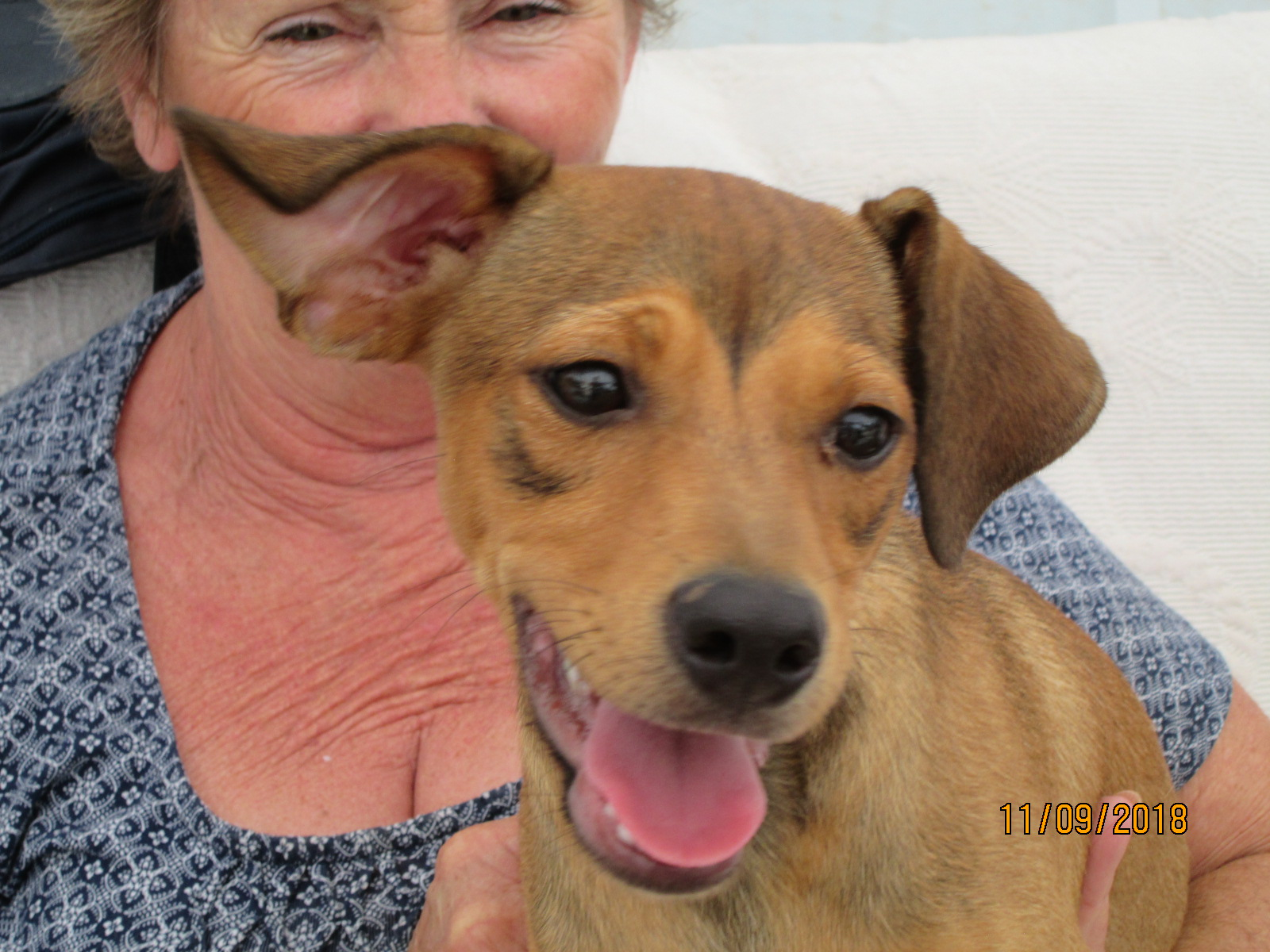 Timmy ? 4 month old male Cross-Breed
