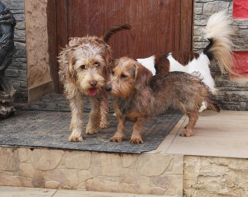 Ernestine and Peggy – 8 month old and 2 year old female Cross-Breeds