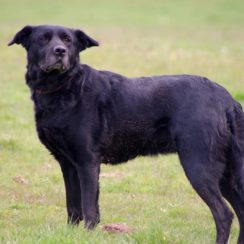 Posts by Hereford and Worcester Animal Rescue | Dogs for